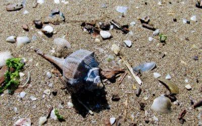 Каорле – да напълниш душата си с море