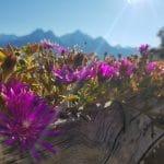 слънце Алпи Линян Вале д'Аоста планина Италия